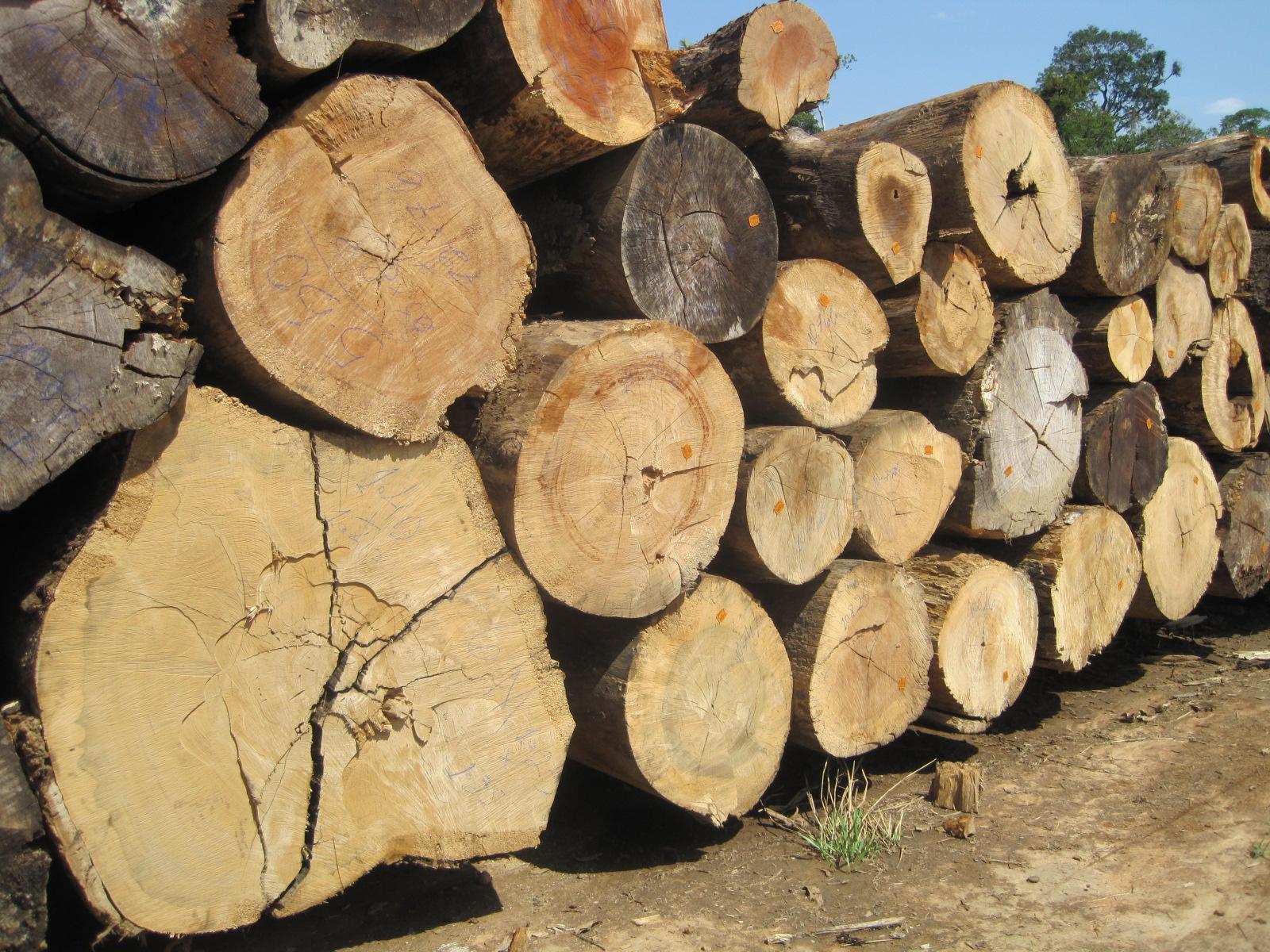Timber and lumber export offers camaru teak ipe from