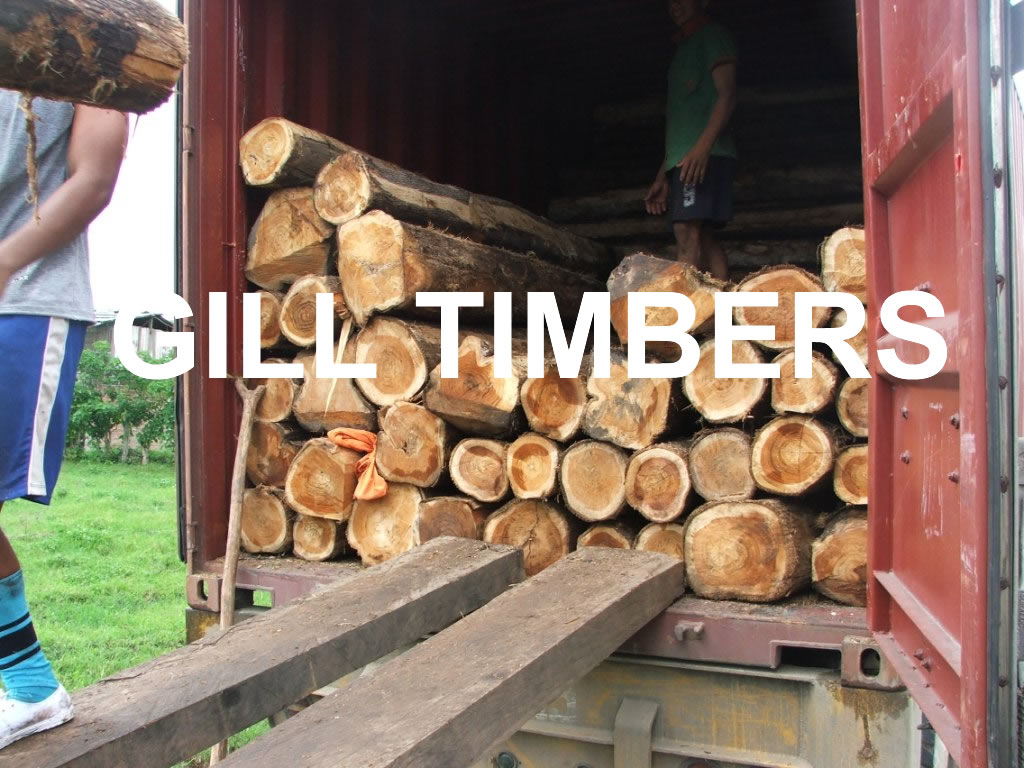 Teak Logs from Ecuador
